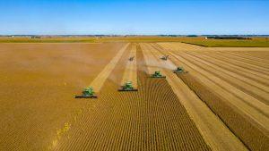 grande colheita
