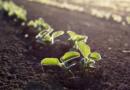 Legislação para sementes e mudas no Brasil