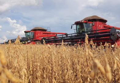 Desempenho da agricultura brasileira durante o primeiro ano da Covid-19