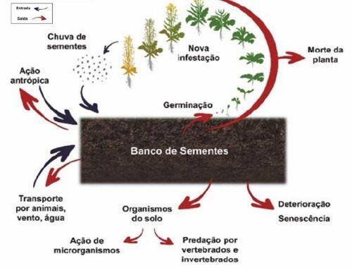 Dinâmica do banco de sementes
