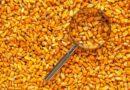 Compra de sementes: fatores importantes que influenciam