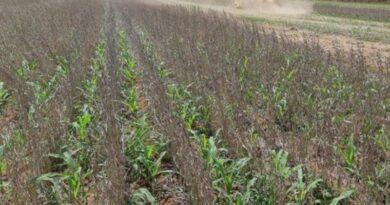 Capa-Metodo-cultivo-intercalar