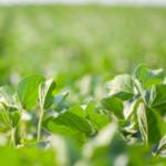 Estudo mostra potencial do agro brasileiro