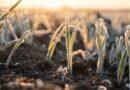 Geadas: como o frio afeta o agronegócio