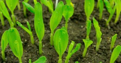 Fatores que afetam a germinação de sementes
